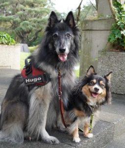 オスカーと先住犬ヒューゴの画像